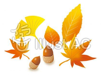 落ち葉と木の実の秋のイラスト