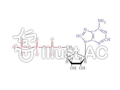アデノシン3リン酸(ATP)のイラスト