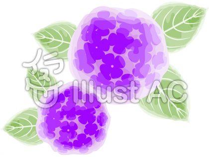 水彩画風紫陽花イラスト01のイラスト