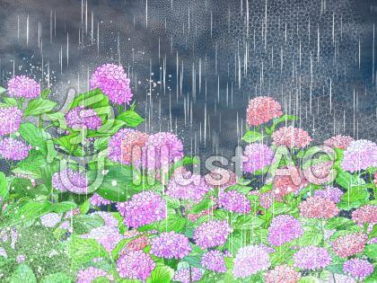紫陽花(雨降り)のイラスト