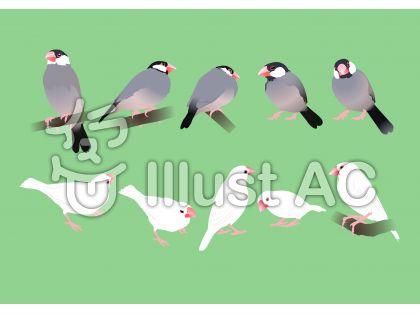 文鳥1のイラスト