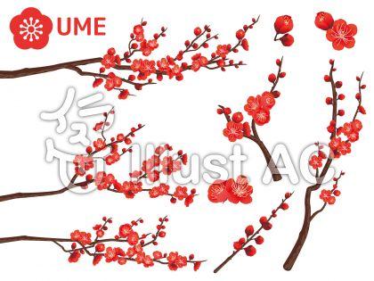 梅の花イラスト無料イラストならイラストac
