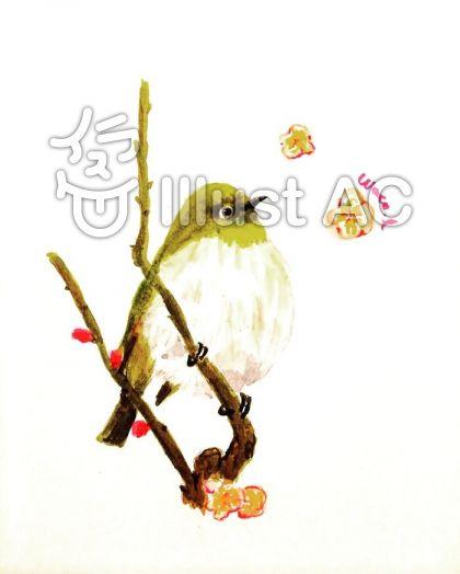 メジロと梅のイラスト