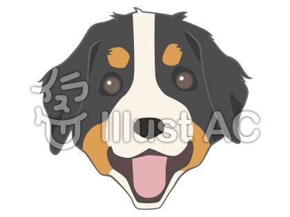 犬フェイス・バーニーズ・マウンテン・ドッグ