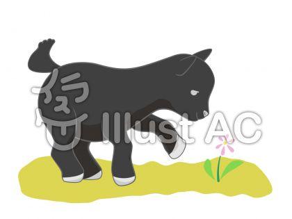 子山羊・黒