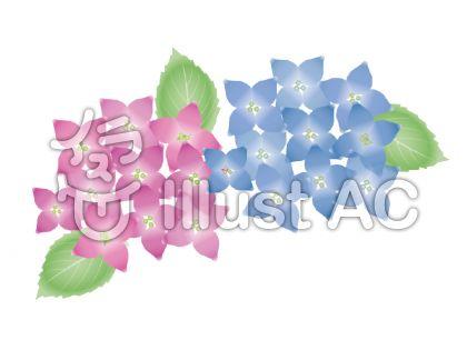 アジサイの花(水彩画風)のイラスト