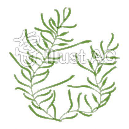 鹿尾菜のイラスト